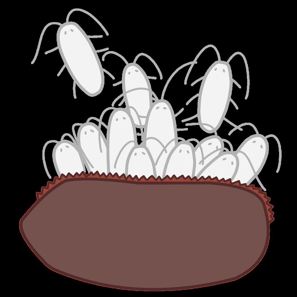 チャバネゴキブリ 繁殖
