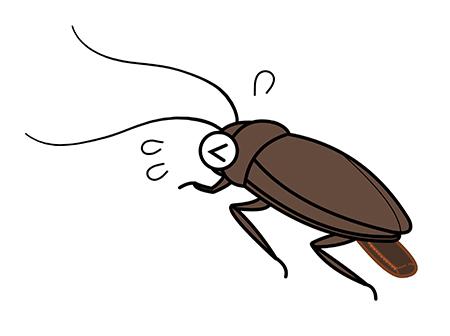 ゴキブリ 糞