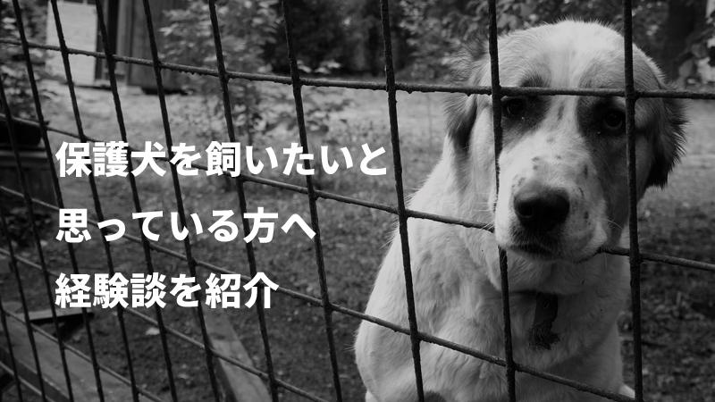 保護犬 飼いたい
